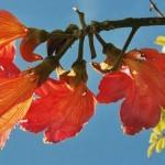 Tantra Blume des Lebens