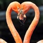 Schwanen-Paar, Liebe, entdecke Tantra